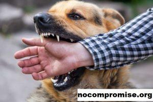 Bagaimana Bertahan dan Mencegah Serangan Hewan Liar di Colorado