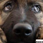 Pemerintah Meluncurkan RUU Kesejahteraan Hewan Untuk Melindungi Hewan Peliharaan